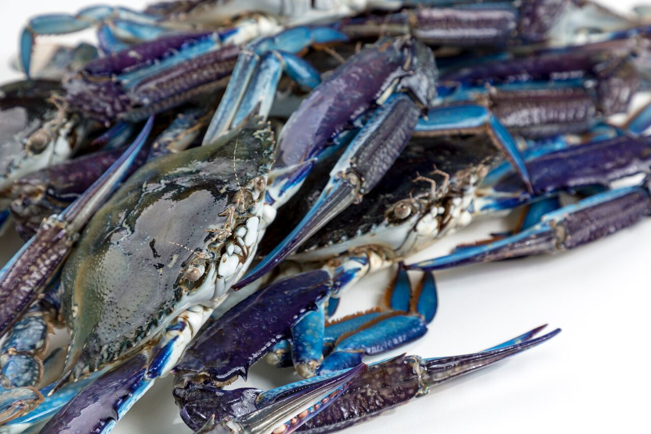 2017 – Secure supply of Blue Swimmer Crabs to market